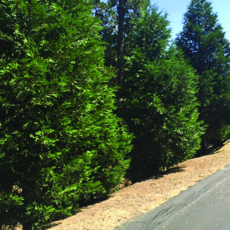 199-cedar-ridge