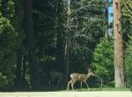 400-cedarridge-deer