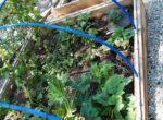 1191-yellowstone-garden
